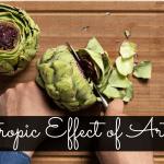 Exploring Nootropics Effect of Artichoke Extract